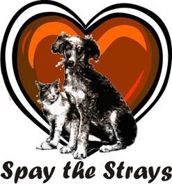 Spay the Strays
