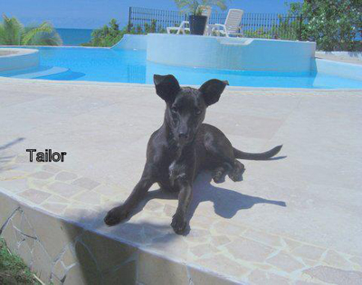 Tailor-adoptable-dog-housebroken-trained